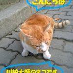 川崎大師のネコ
